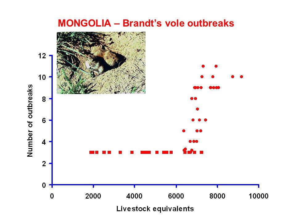 MONGOLIA – Brandt's vole outbreaks