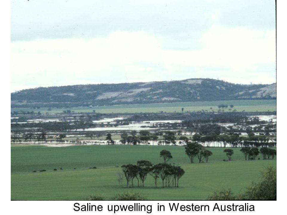 Saline upwelling in Western Australia