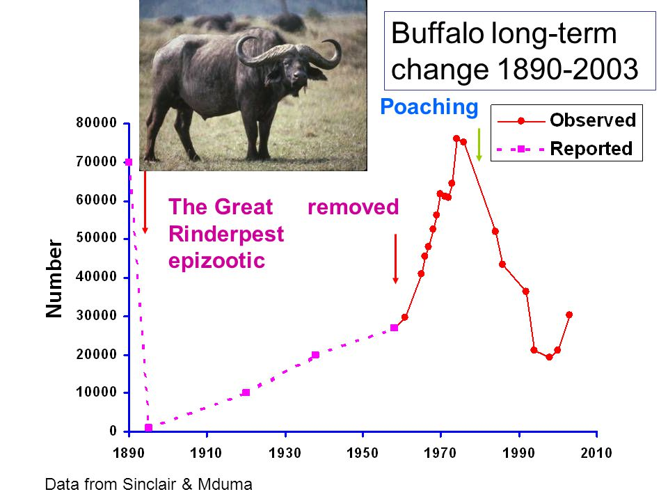 The Great Rinderpest epizootic removed Buffalo long-term change 1890-2003 Poaching Data from Sinclair & Mduma