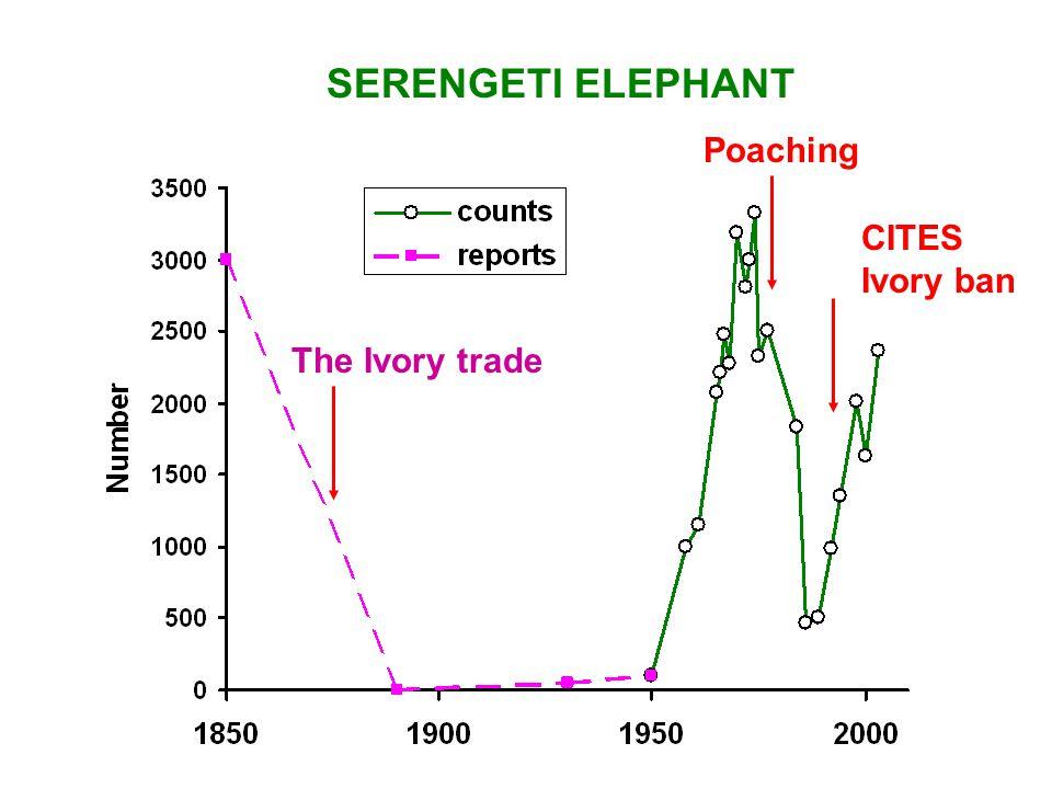 The Ivory trade Poaching SERENGETI ELEPHANT CITES Ivory ban
