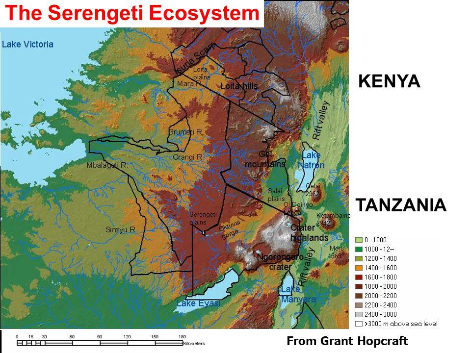 Rift valley Isuria Scarp Ol Doinyo Lengai Meru 4565 Ketumbaine 2942 Gelai 2962 Olduvai gorge The Serengeti Ecosystem Salai plains Serengeti plains Loita plains From Grant Hopcraft KENYA TANZANIA
