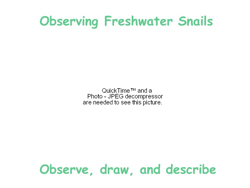 Observe millipede in woodland environment … Discuss how it coexists with pill bug and plants.