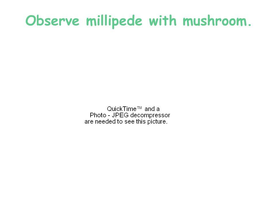 Observe millipede with mushroom.