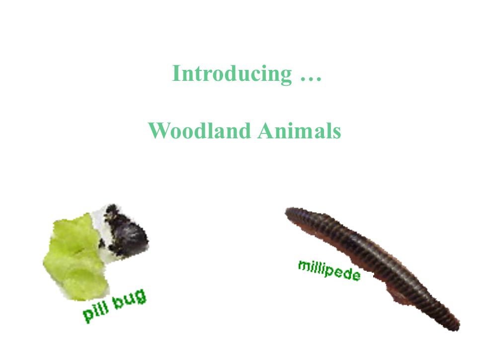 Add pill bug to … woodland environment