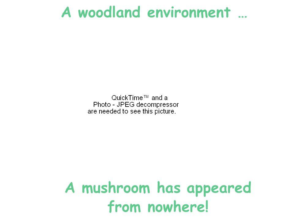 Woodland Animals: millipedes
