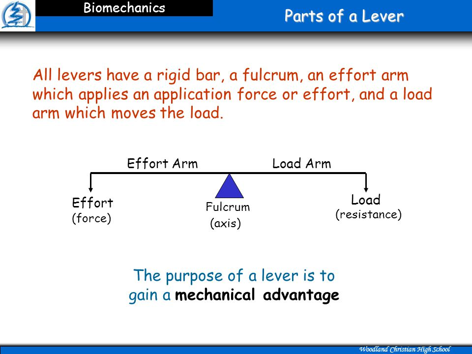 Woodland Christian High School Parts of a Lever Biomechanics All levers have a rigid bar, a fulcrum, an effort arm which applies an application force or effort, and a load arm which moves the load.