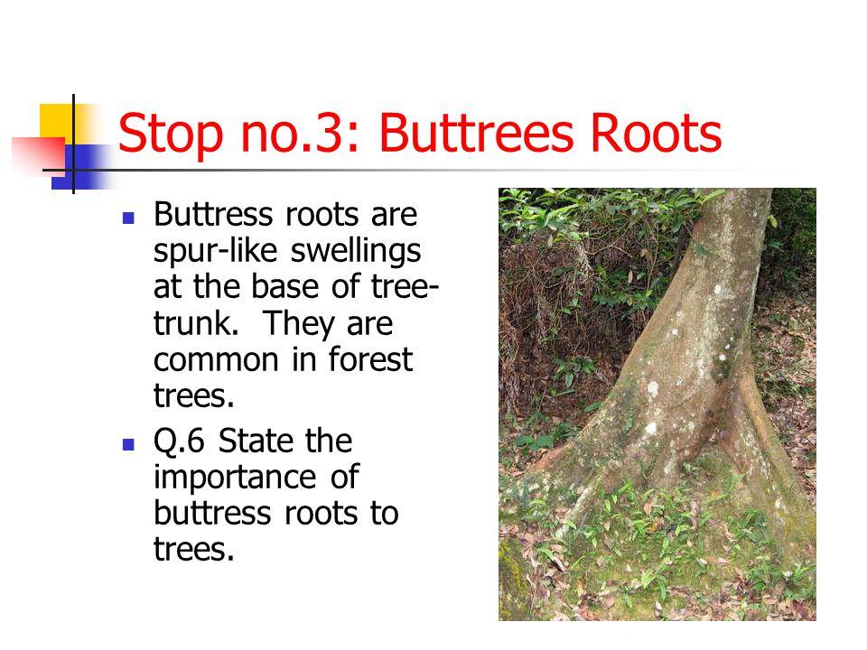 Stop no.4: Liverworts, mosses and lichens Q.7 Liverworts, mosses and lichens are very small plants .