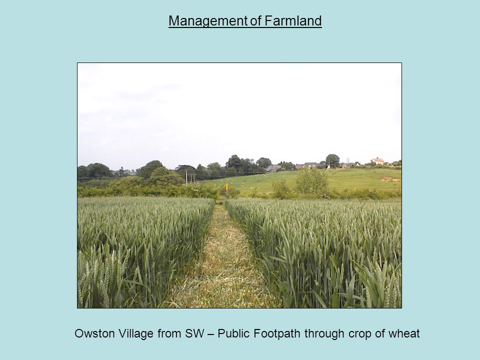 Management of Farmland Owston Village from SW – Public Footpath through crop of wheat