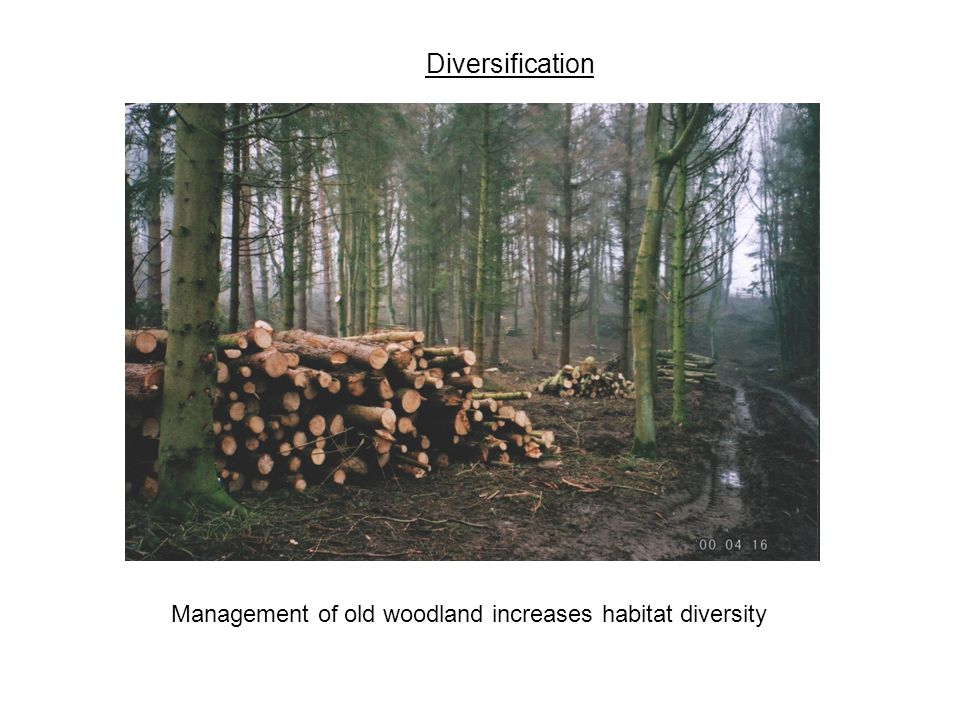 Diversification Management of old woodland increases habitat diversity