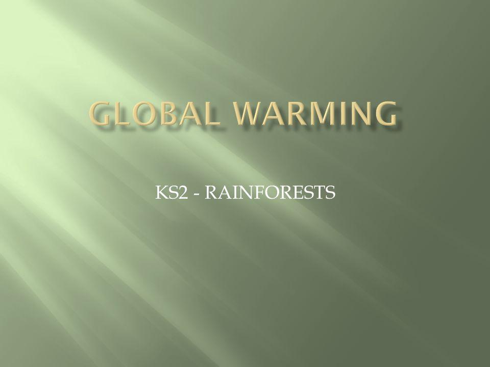 KS2 - RAINFORESTS