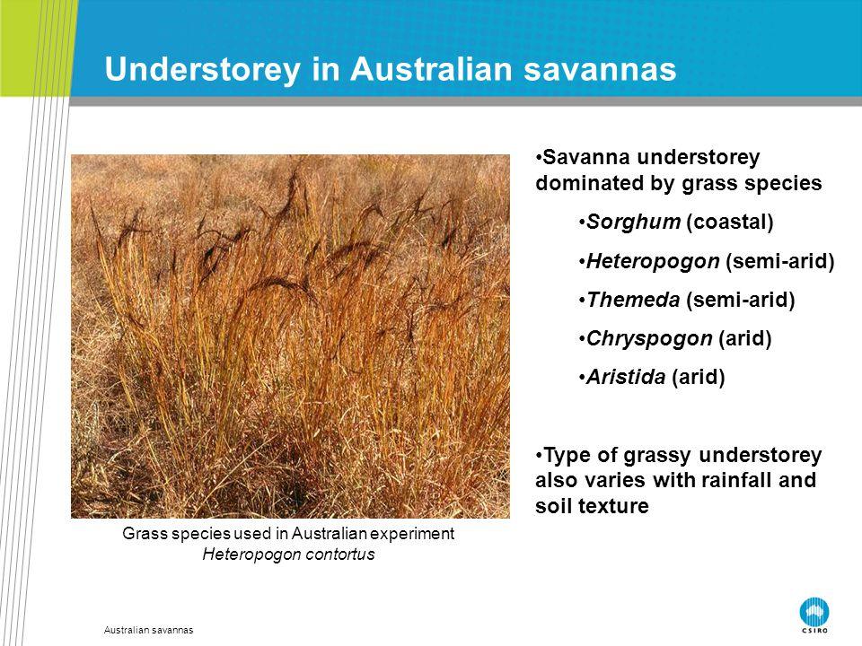 Australian savannas Understorey in Australian savannas Savanna understorey dominated by grass species Sorghum (coastal) Heteropogon (semi-arid) Themed