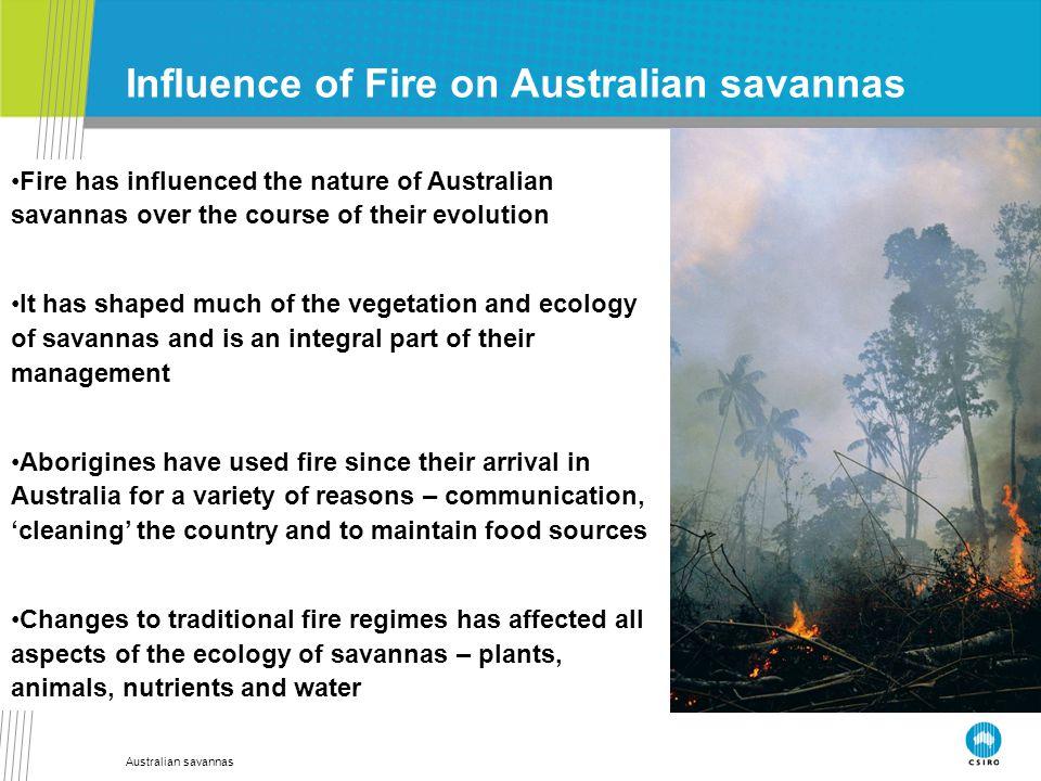 Australian savannas Influence of Fire on Australian savannas Fire has influenced the nature of Australian savannas over the course of their evolution
