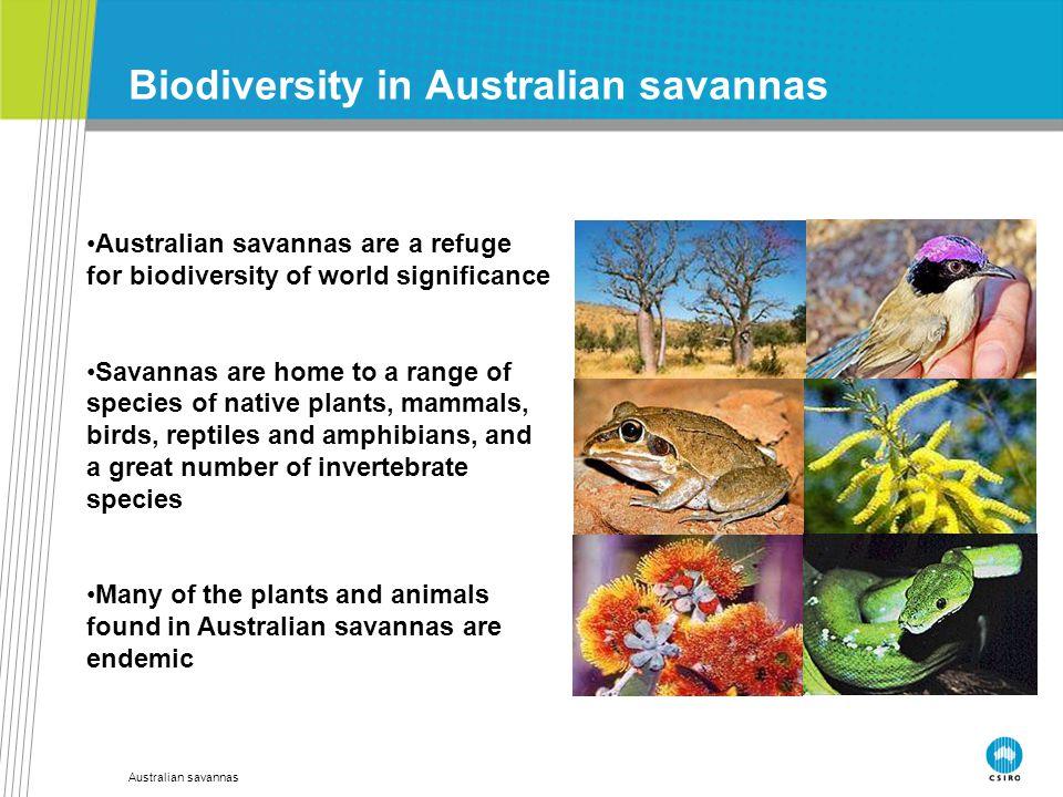 Australian savannas Biodiversity in Australian savannas Australian savannas are a refuge for biodiversity of world significance Savannas are home to a