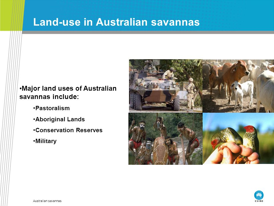 Australian savannas Land-use in Australian savannas Major land uses of Australian savannas include: Pastoralism Aboriginal Lands Conservation Reserves
