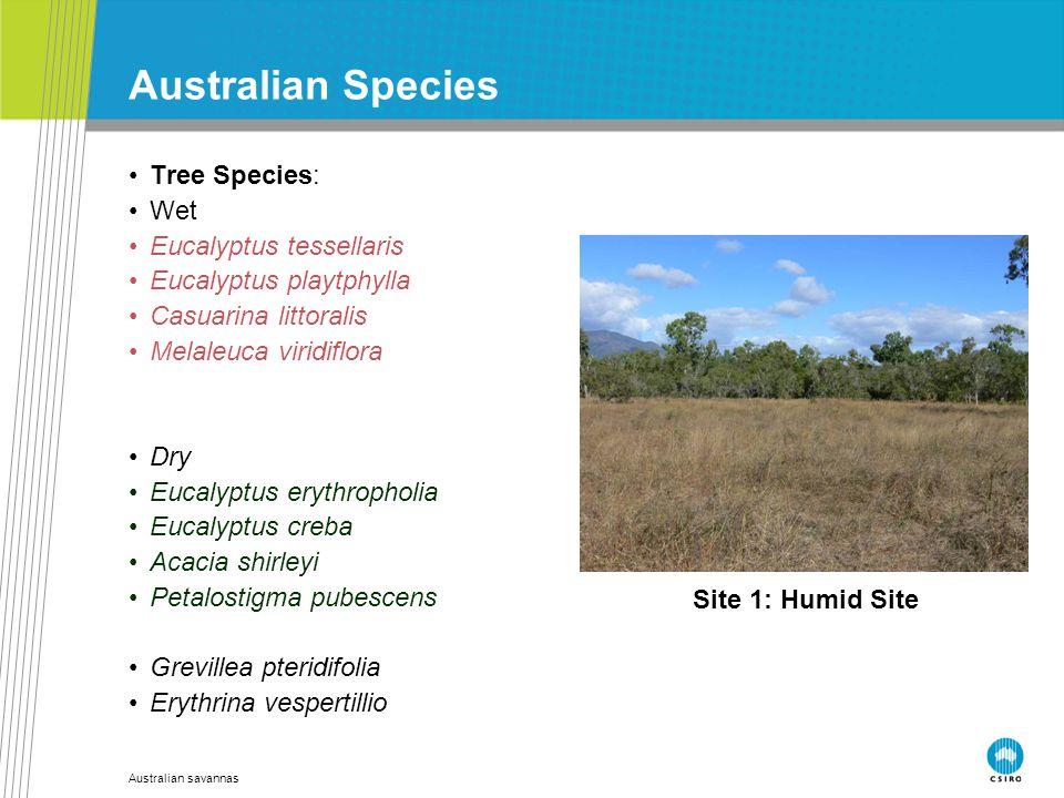 Australian savannas Australian Species Tree Species: Wet Eucalyptus tessellaris Eucalyptus playtphylla Casuarina littoralis Melaleuca viridiflora Dry
