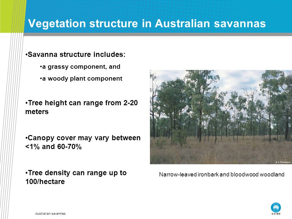 Australian savannas Vegetation structure in Australian savannas Savanna structure includes: a grassy component, and a woody plant component Tree heigh