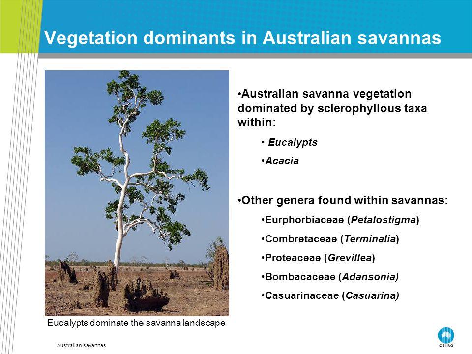 Australian savannas Vegetation dominants in Australian savannas Australian savanna vegetation dominated by sclerophyllous taxa within: Eucalypts Acaci