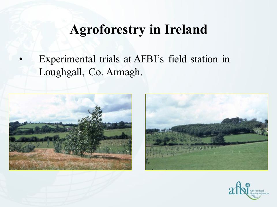 Experimental trials at AFBI's field station in Loughgall, Co. Armagh. Agroforestry in Ireland