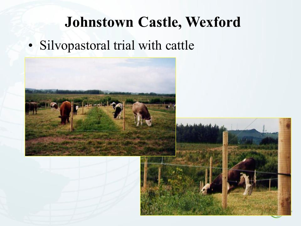Johnstown Castle, Wexford Silvopastoral trial with cattle