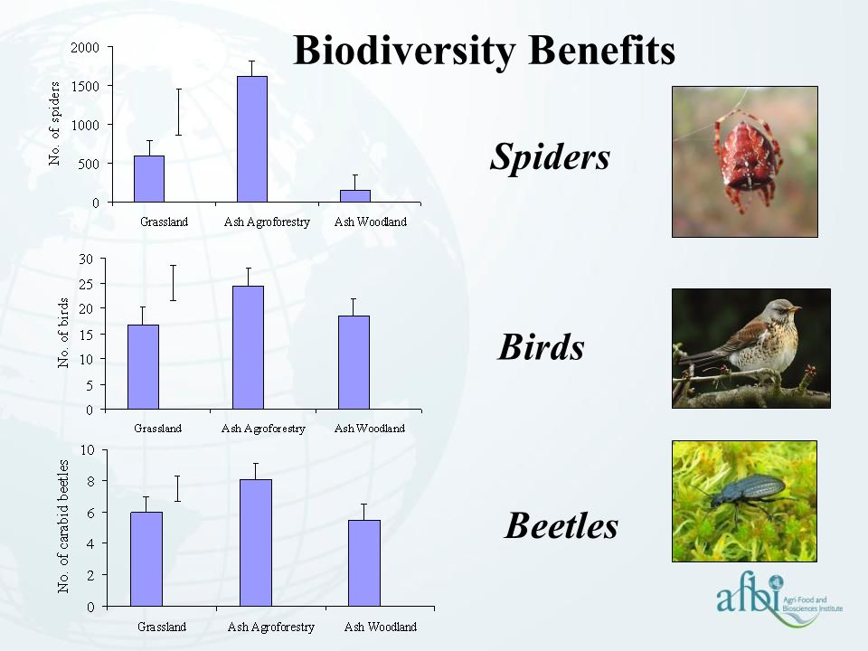 Biodiversity Benefits Spiders Birds Beetles