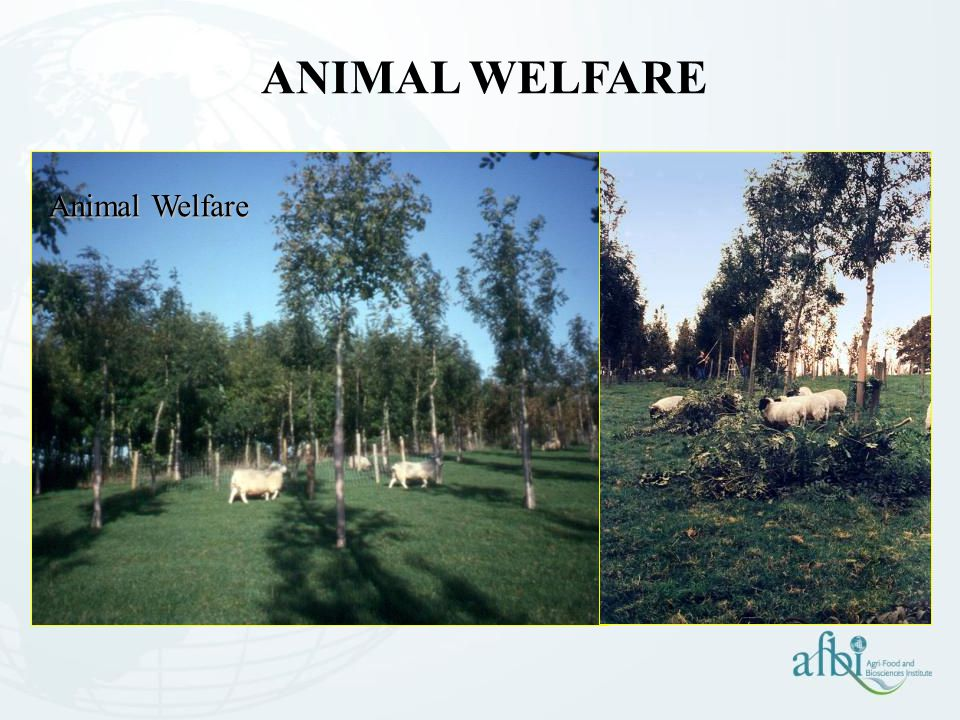 ANIMAL WELFARE Animal Welfare