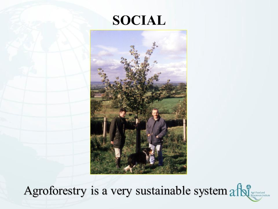 SOCIAL Agroforestry is a very sustainable system