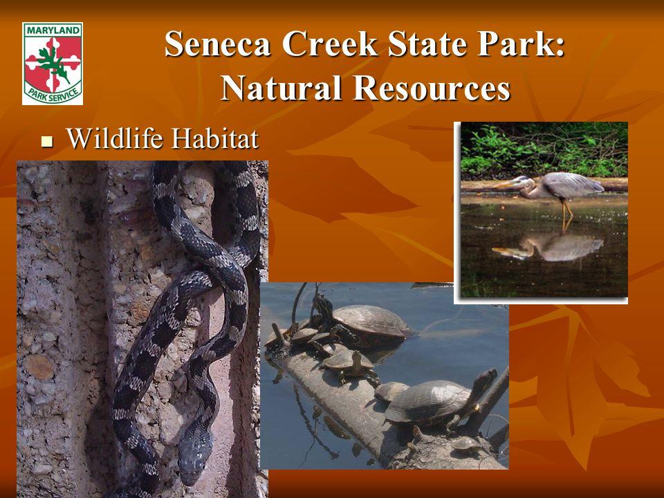 Seneca Creek State Park: Natural Resources Wildlife Habitat Wildlife Habitat