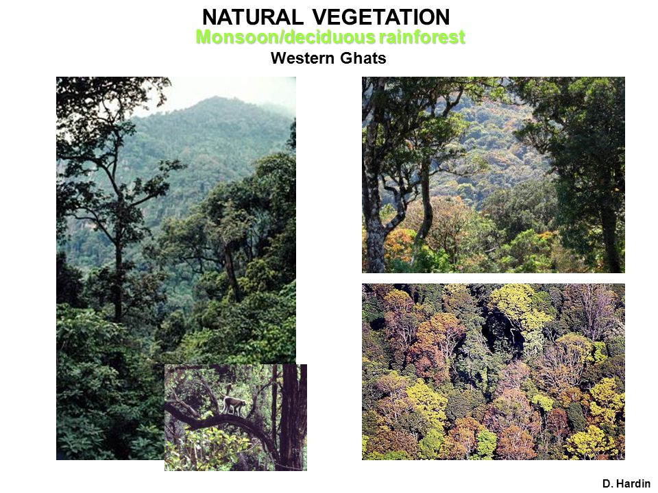 Western Ghats D. Hardin NATURAL VEGETATION Monsoon/deciduous rainforest