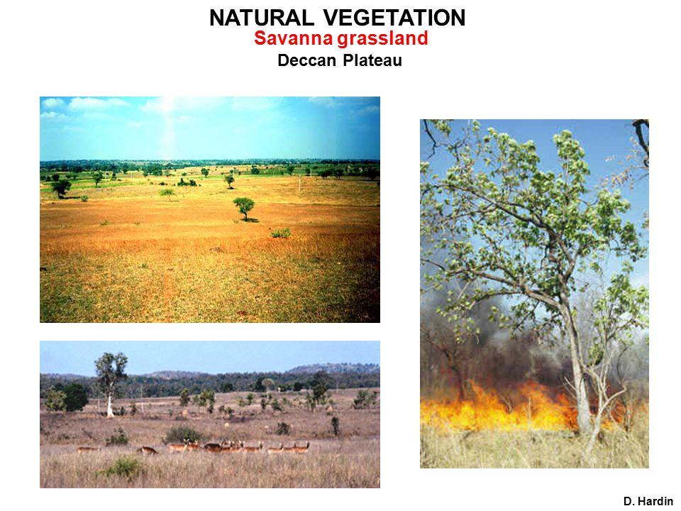 Deccan Plateau D. Hardin NATURAL VEGETATION Savanna grassland