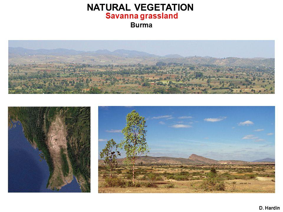 Burma D. Hardin NATURAL VEGETATION Savanna grassland