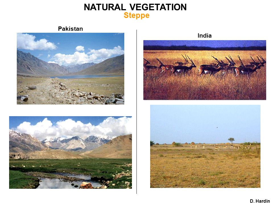 Pakistan India D. Hardin NATURAL VEGETATION Steppe