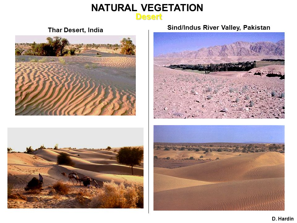 Thar Desert, India Sind/Indus River Valley, Pakistan D. Hardin NATURAL VEGETATIONDesert