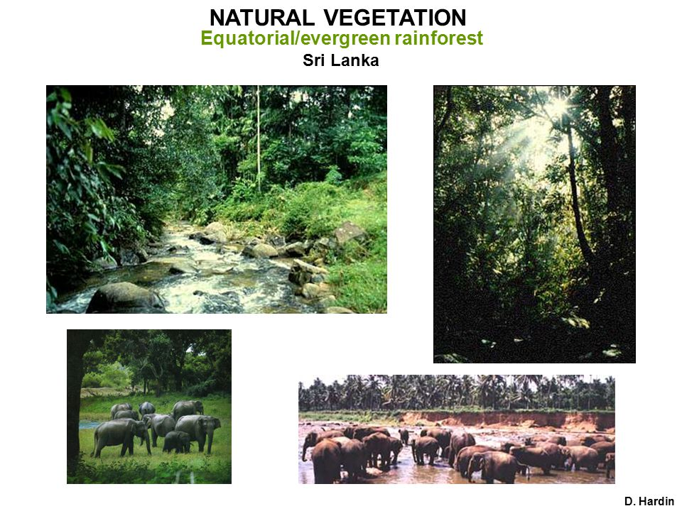 Sri Lanka D. Hardin NATURAL VEGETATION Equatorial/evergreen rainforest