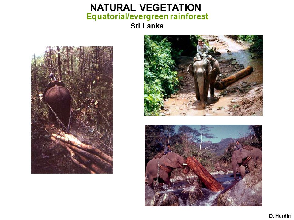 D. Hardin Sri Lanka NATURAL VEGETATION Equatorial/evergreen rainforest