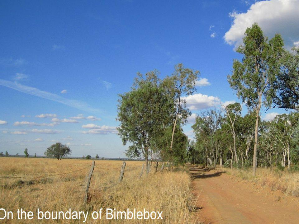 On the boundary of Bimblebox