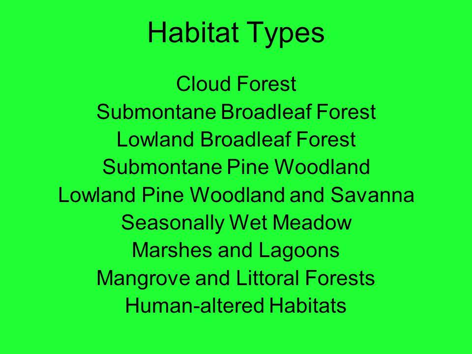 Habitat Types Cloud Forest Submontane Broadleaf Forest Lowland Broadleaf Forest Submontane Pine Woodland Lowland Pine Woodland and Savanna Seasonally