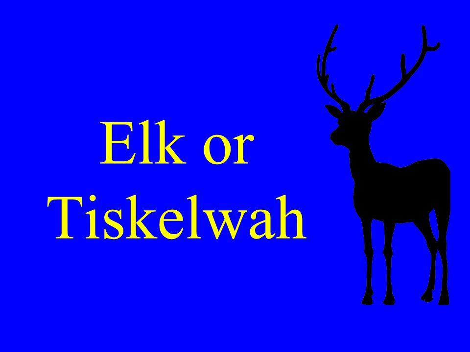 River of fat elk