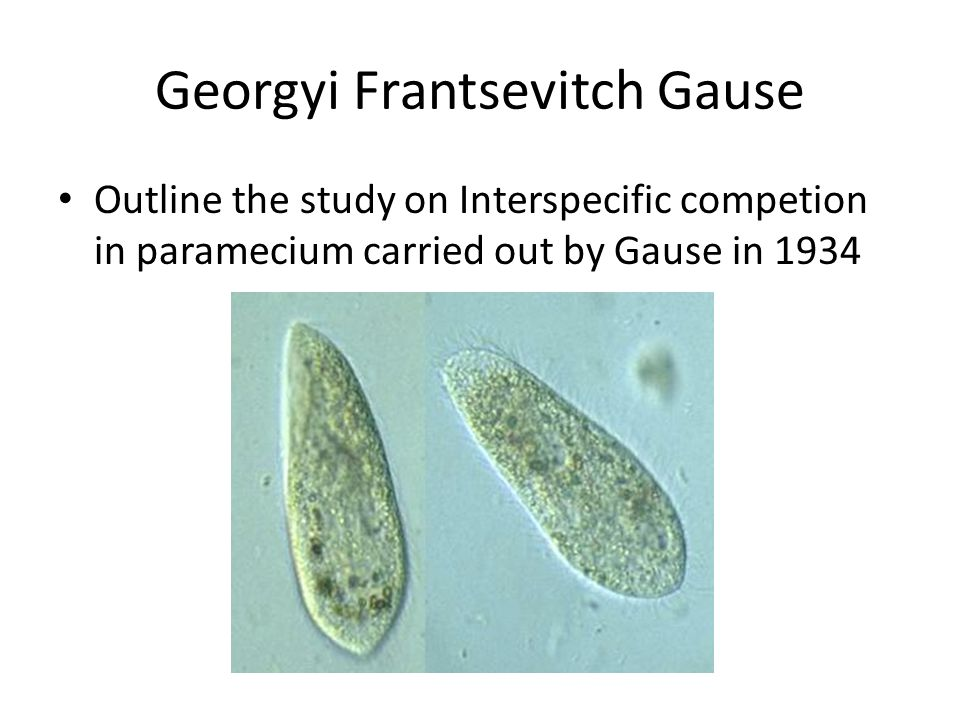 Georgyi Frantsevitch Gause Outline the study on Interspecific competion in paramecium carried out by Gause in 1934