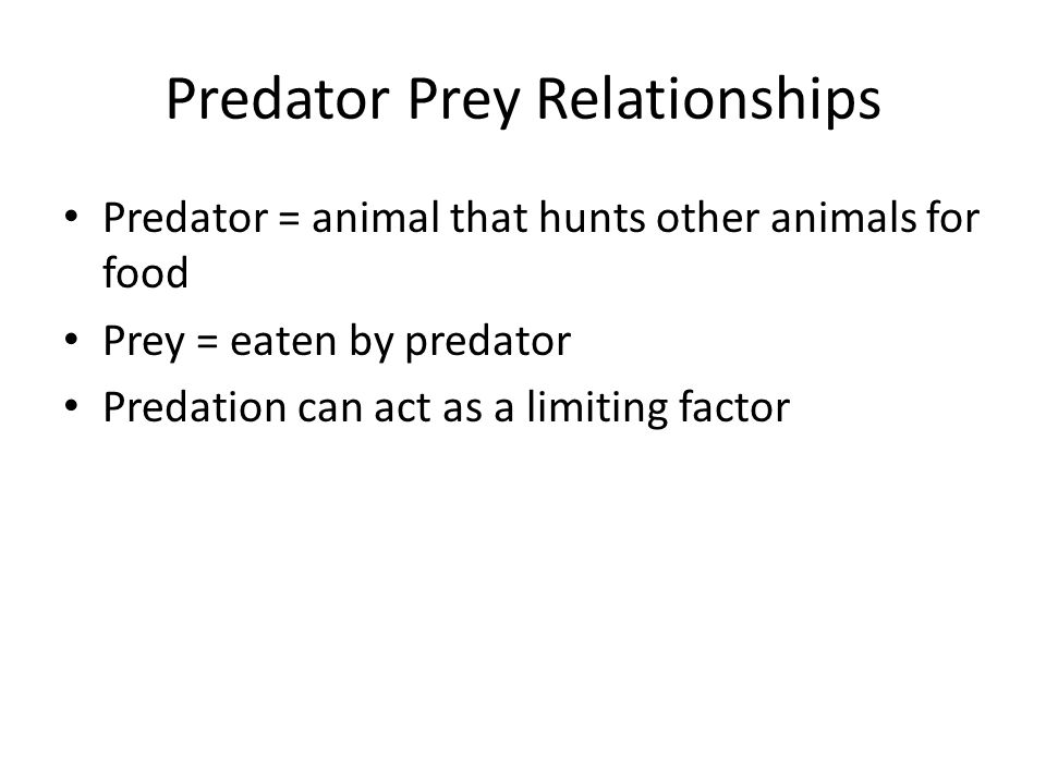 Predator Prey Relationships Predator = animal that hunts other animals for food Prey = eaten by predator Predation can act as a limiting factor