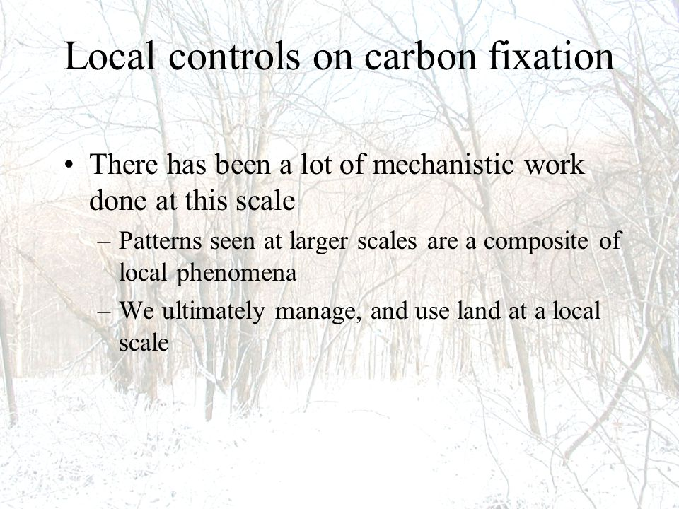 Local controls on carbon fixation There has been a lot of mechanistic work done at this scale –Patterns seen at larger scales are a composite of local