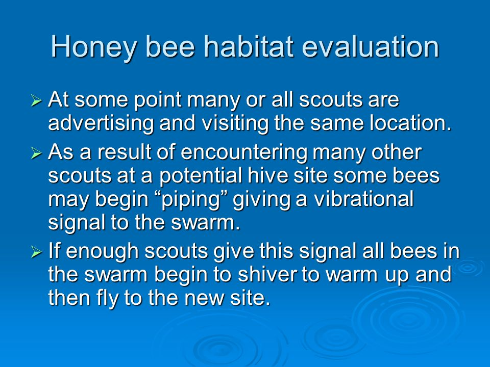 Honey bee habitat evaluation  At some point many or all scouts are advertising and visiting the same location.