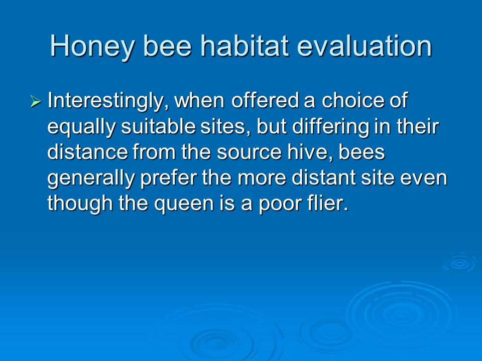 Honey bee habitat evaluation  Interestingly, when offered a choice of equally suitable sites, but differing in their distance from the source hive, bees generally prefer the more distant site even though the queen is a poor flier.
