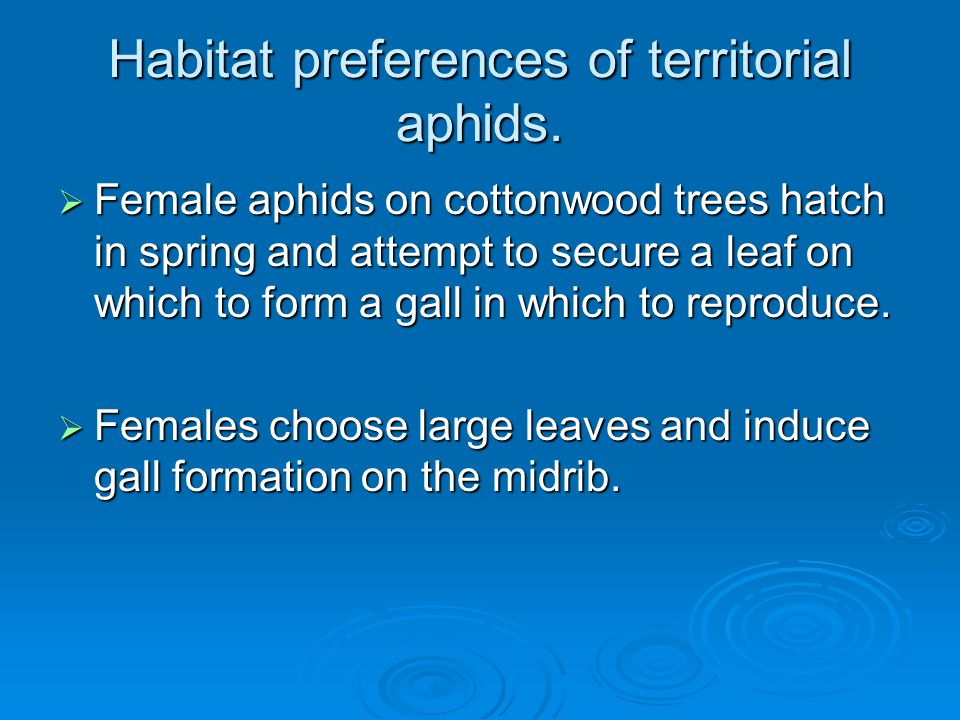 Habitat preferences of territorial aphids.