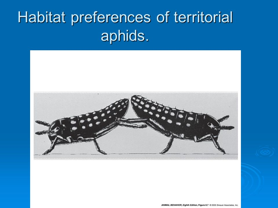 Habitat preferences of territorial aphids. 8.7