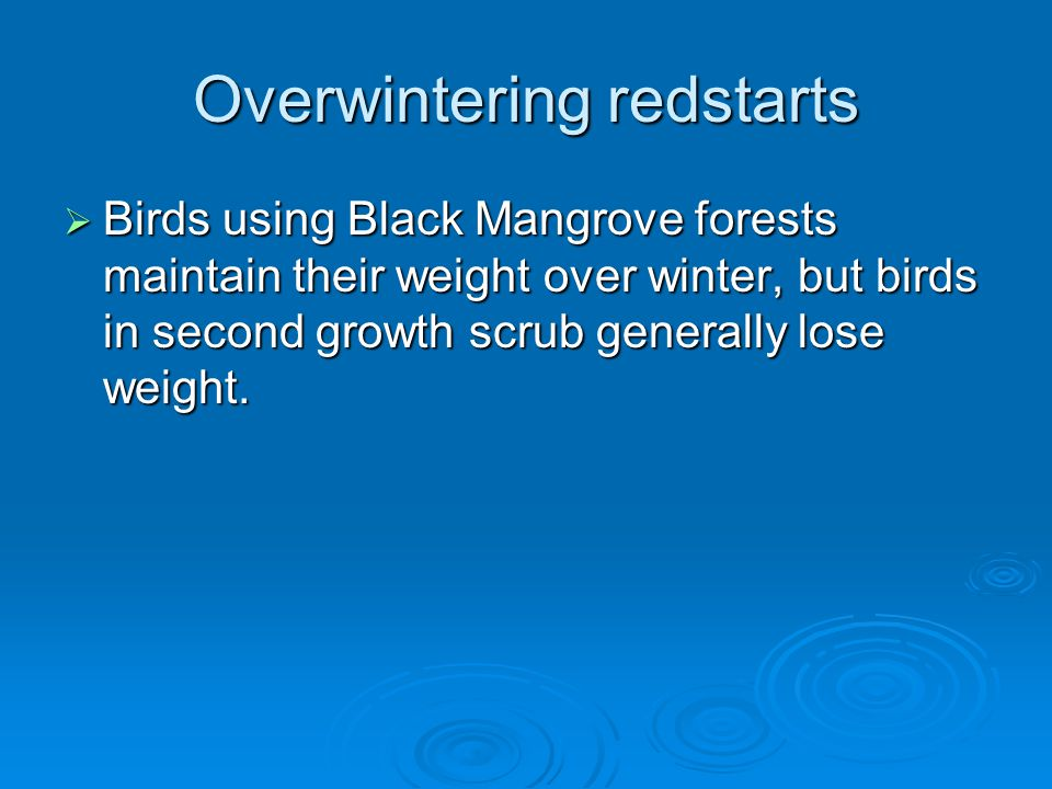 Overwintering redstarts  Birds using Black Mangrove forests maintain their weight over winter, but birds in second growth scrub generally lose weight.