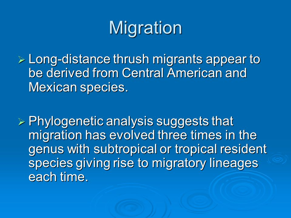 Migration  Long-distance thrush migrants appear to be derived from Central American and Mexican species.
