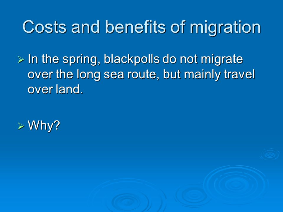 Costs and benefits of migration  In the spring, blackpolls do not migrate over the long sea route, but mainly travel over land.