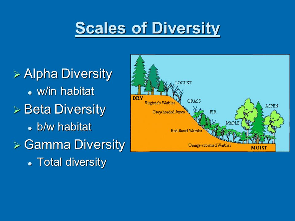 Scales of Diversity  Alpha Diversity w/in habitat w/in habitat  Beta Diversity b/w habitat b/w habitat  Gamma Diversity Total diversity Total diver