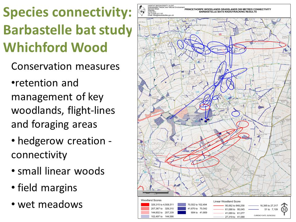 Species connectivity: Barbastelle bat study Whichford Wood Conservation measures retention and management of key woodlands, flight-lines and foraging