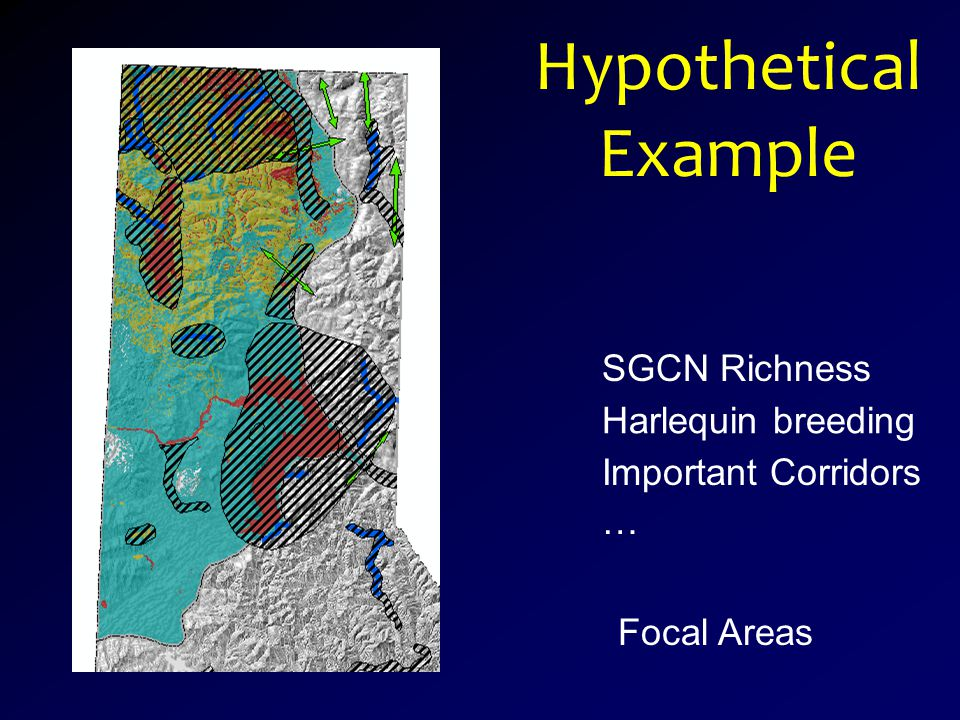 Hypothetical Example SGCN Richness Harlequin breeding Important Corridors … Focal Areas